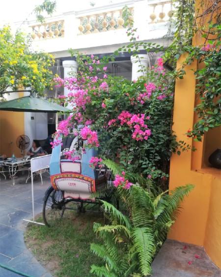 Pondichéry Pouss-pouss bariolé dans un jardin