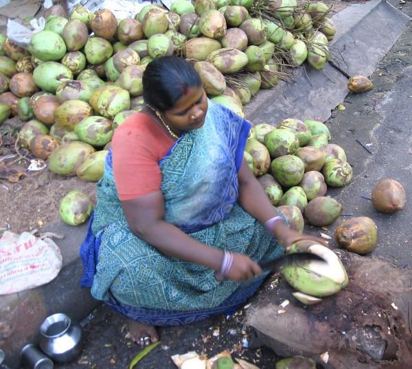 Inde Indienne en sari qui découpe une noix de coco