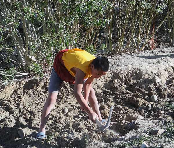 Inde Ladakh Jeune qui bêche un jardin