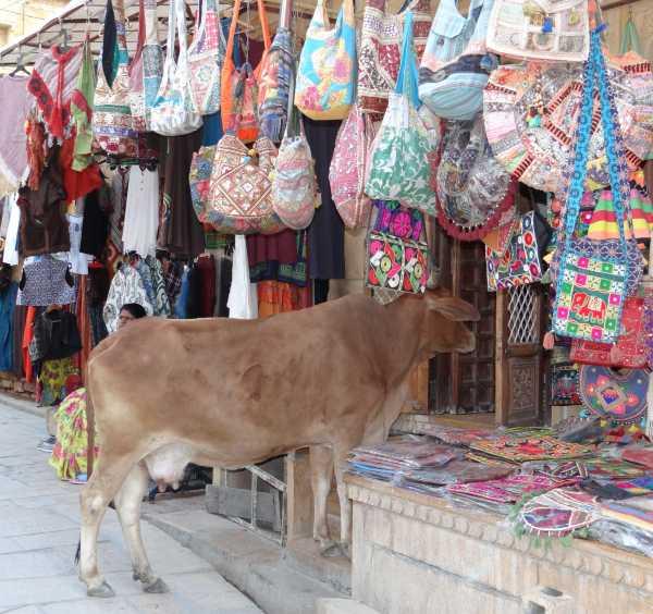 Vache entrant dans un magasin