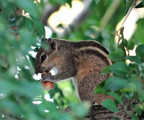 Ecureuil dans un arbre